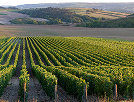 real estate ca wine country